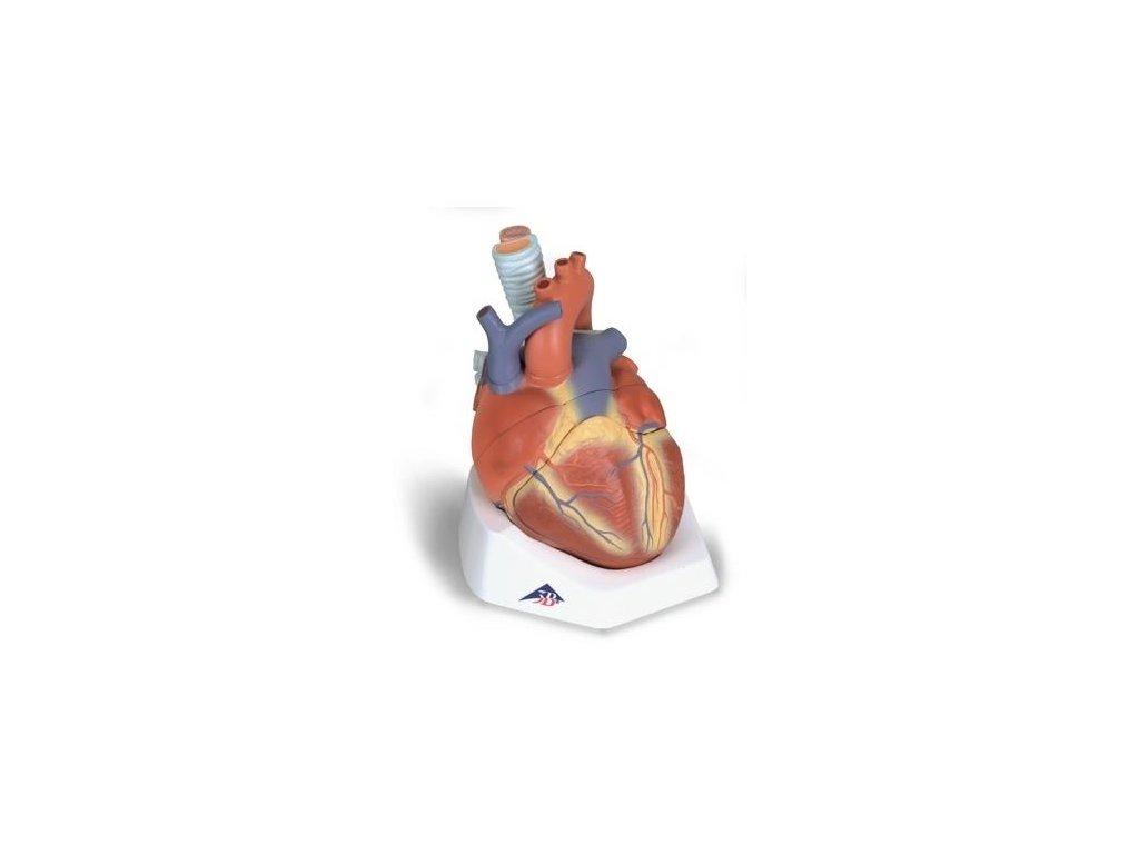 Model srdce, 7 částí
