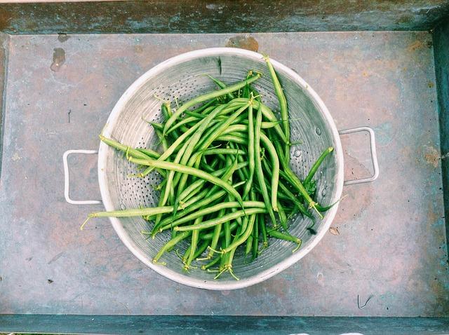 fazolky-recept