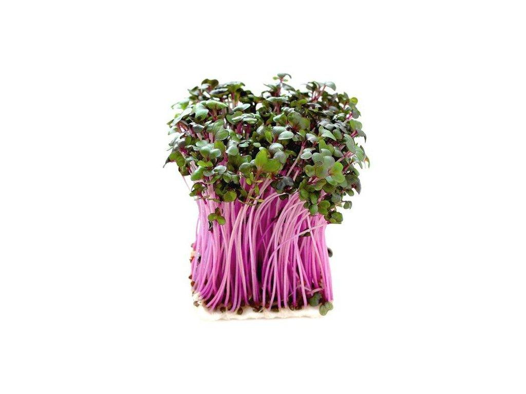 ČERVENÉ ZELÍ semena na klíčky 10g