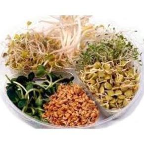 Jemná směs - semínka na klíčení 20 g