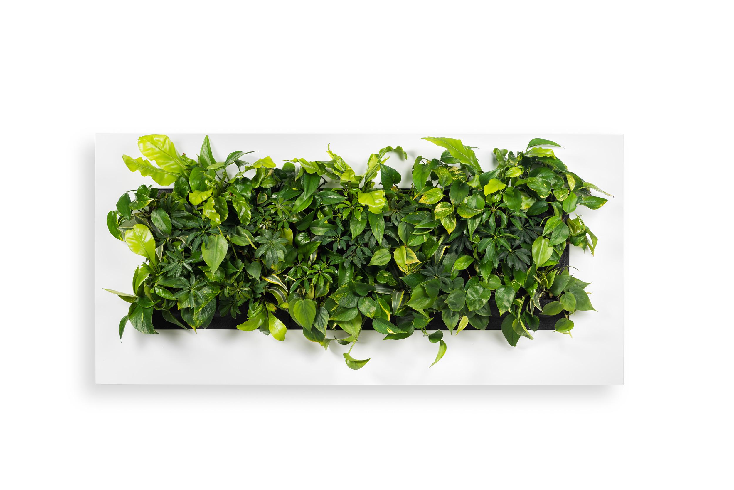 Příklad osázení živého zeleného obrazu pro interiér