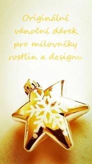 LivePicture jako originální vánoční dárek pro milovníky rostlin a designu - rychlá instalace, jednoduchá péče :-)