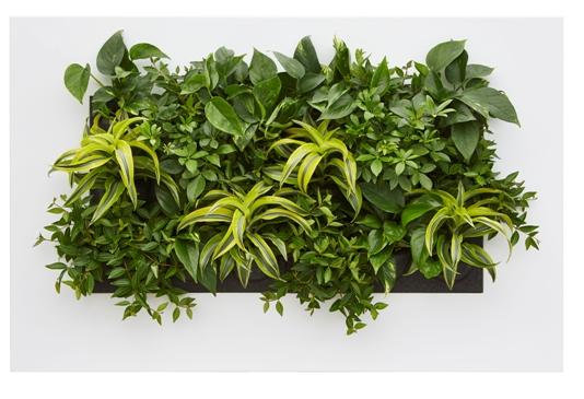 Živý zelený obraz 112x72x7 cm
