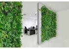 Živá zelená stěna LivePanel PACK 6x4