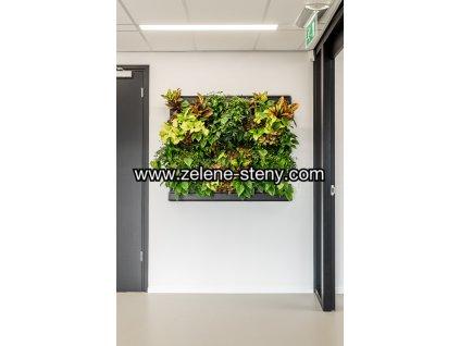 Zelená stěna LivePanel PACK 3x2 - příklad osázení