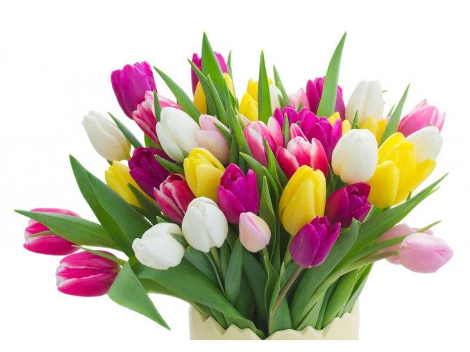 Kytice tulipánů a narcissu