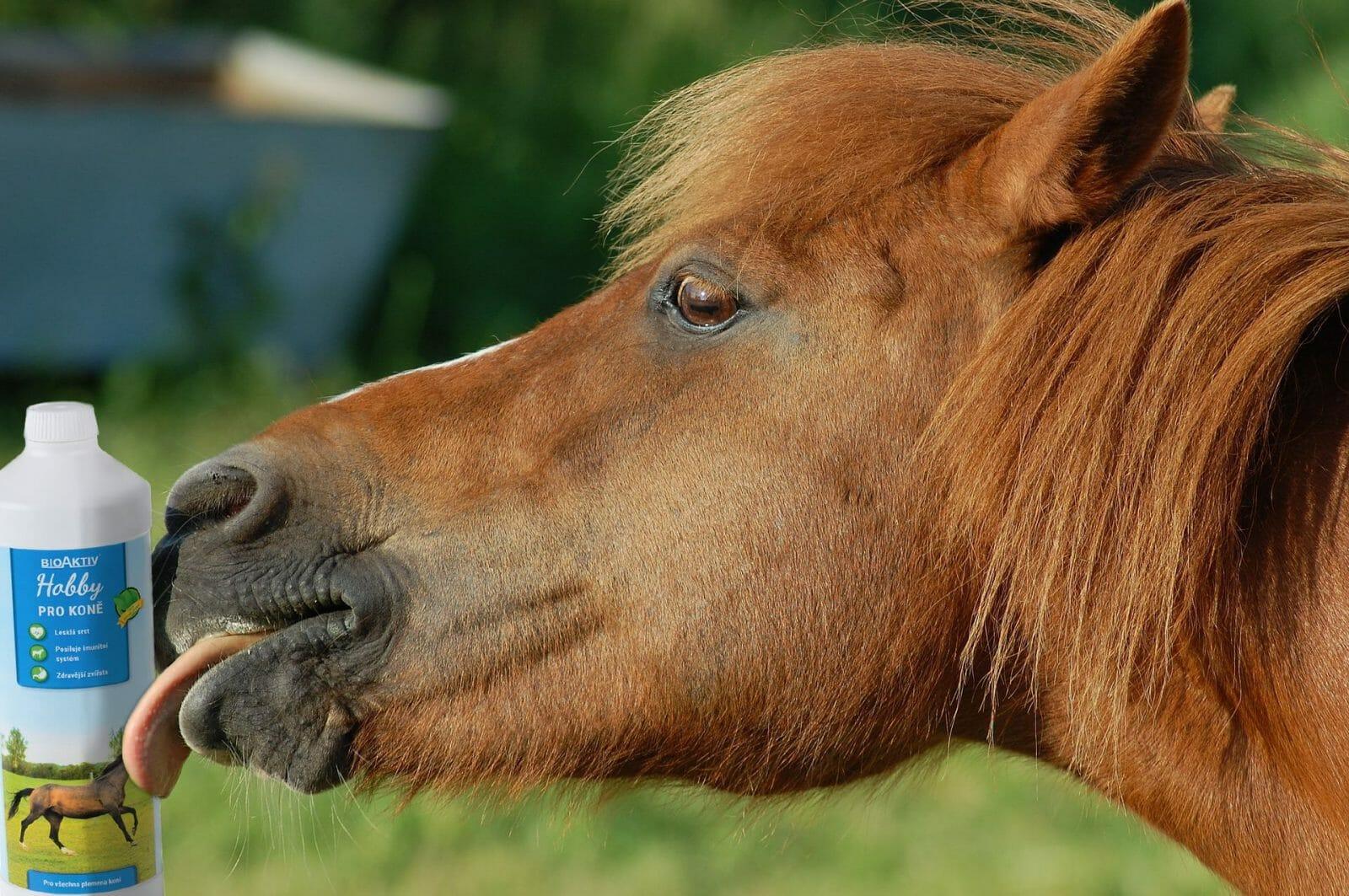 BioAktiv Hobby, produkty pro chovatele a milovníky zvířat