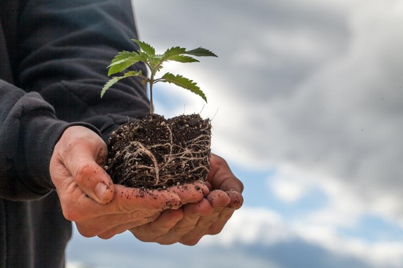 Jak vybrat správná hnojiva na růst a květ