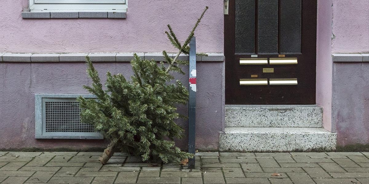 Co s vánočním stromečkem po Vánocích?