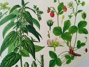 Herbář  léčivých bylin