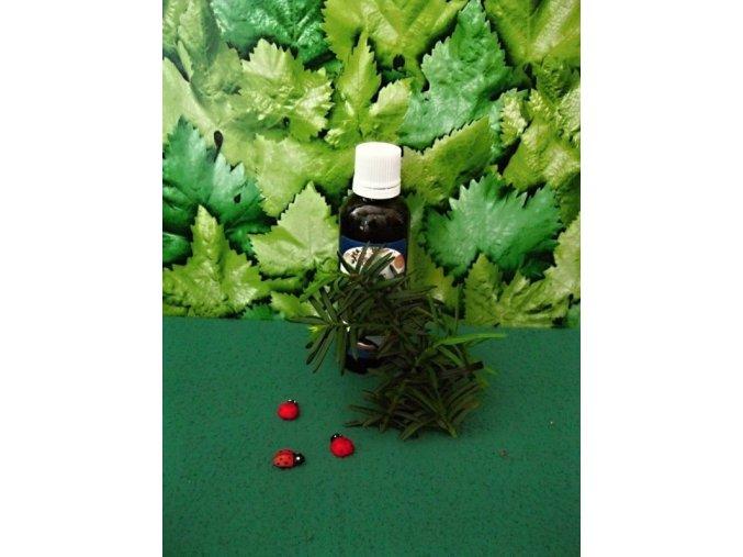Lesní bez hroznatý tinktura z pupenů. Antioxidant, imunita, játra, ledviny