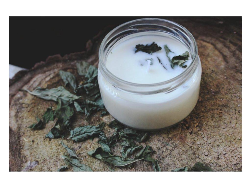 Sojová svíčka ve skle 50 ml | Máta a Tea Tree