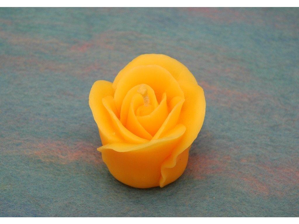Královská růže