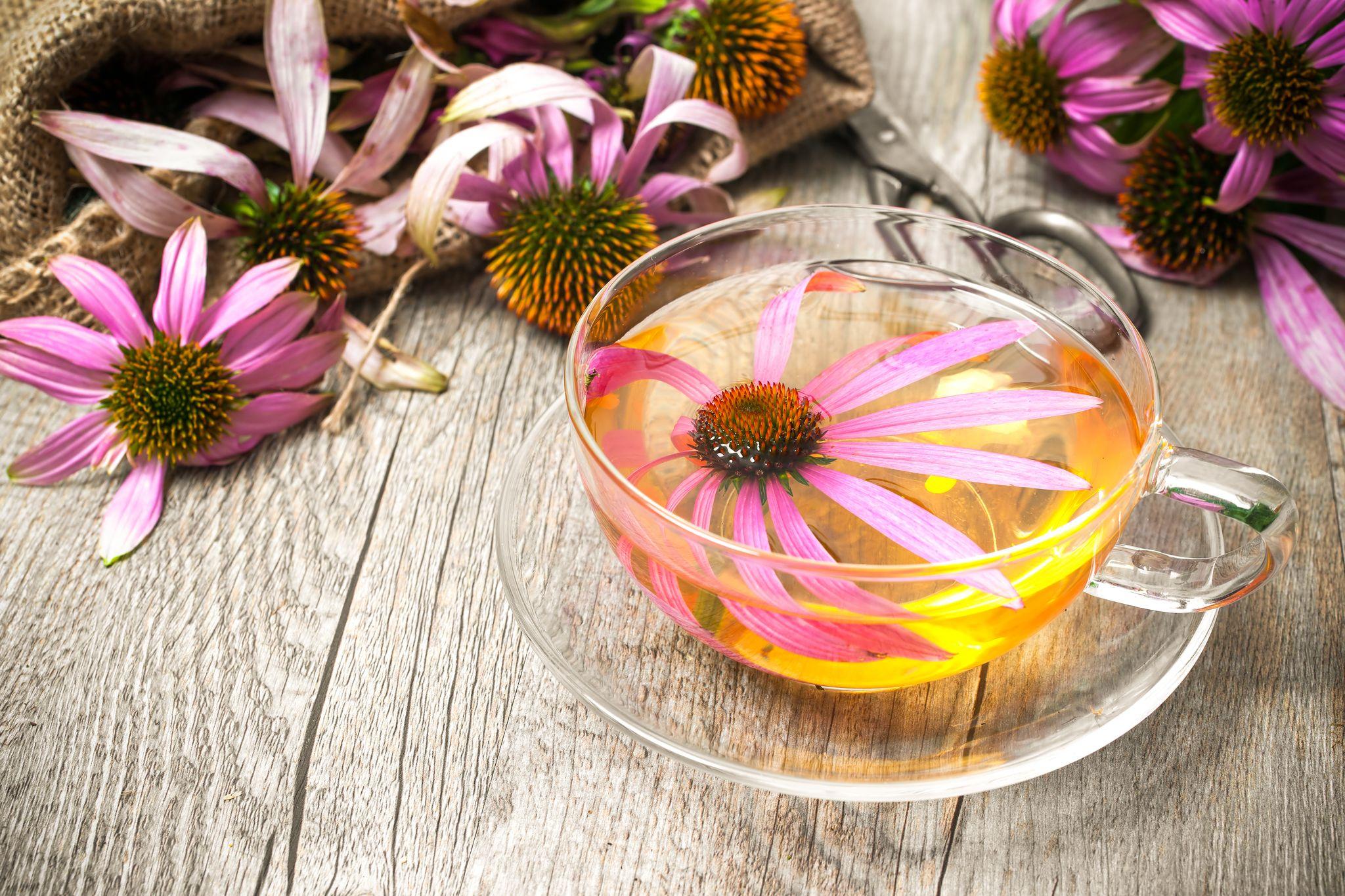 Echinaceový čaj – bojujte se zimní únavou