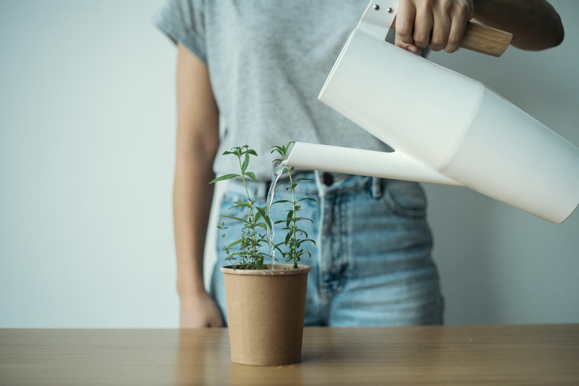 reuse-biodegradable-package-organic-seed-stick-herbs