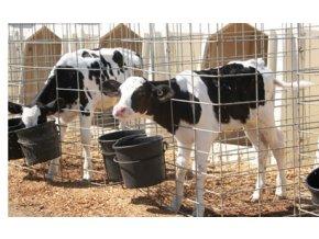 bledsoe dairy calves drugs