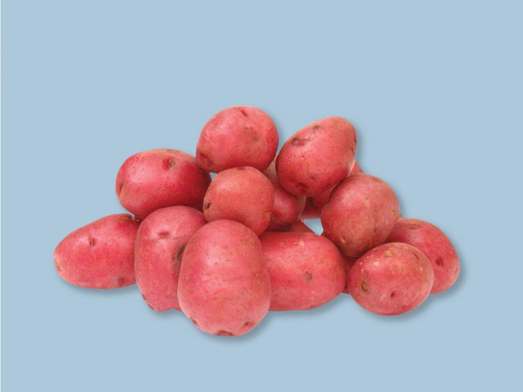 Sadbové zemiaky RED FANTASY