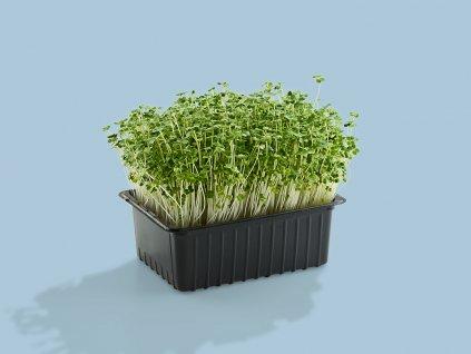 zezahora brokolica