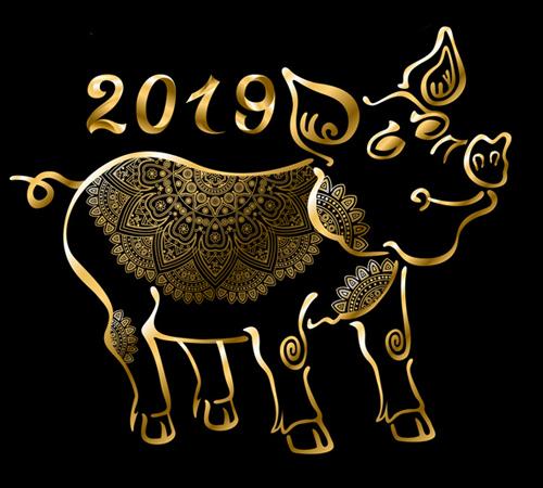 Co přinesl rok 2019 ?