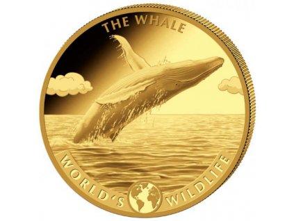 Zlatá moderní mince Whale 5 Oz 2020 proof