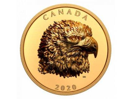 Zlatá moderní Proud Bald Eagle 2 Oz 2020 proof