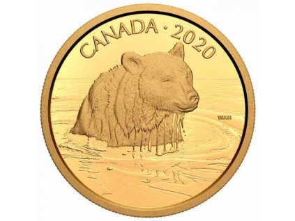 Zlatá moderní mince Medvěd Grizzly 35g proof 2020