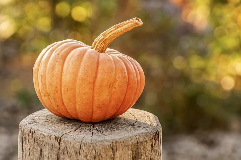 pumpkin-4454745_960_720