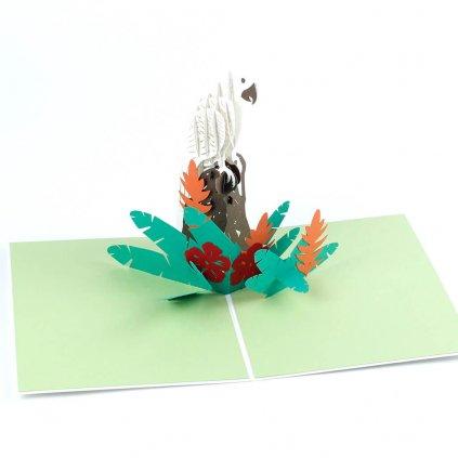 3D přání Papoušek