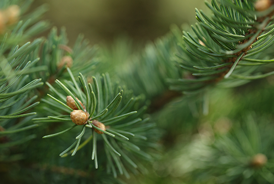 Pre milovníkov CÉDROVÉHO dreva