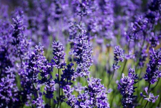 Pre milovníkov KVETINOVÝCH vôní