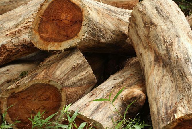 Pre milovníkov RUŽOVÉHO dreva