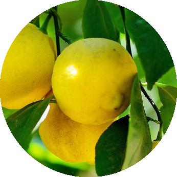 INCI - Citrónová šťava (Citrus Limon)