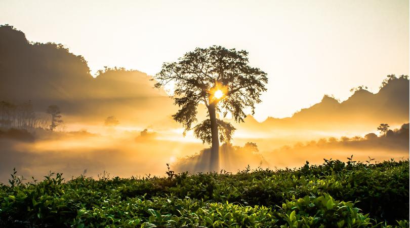 Vedeli ste, čo predstavuje symbol stromu života?