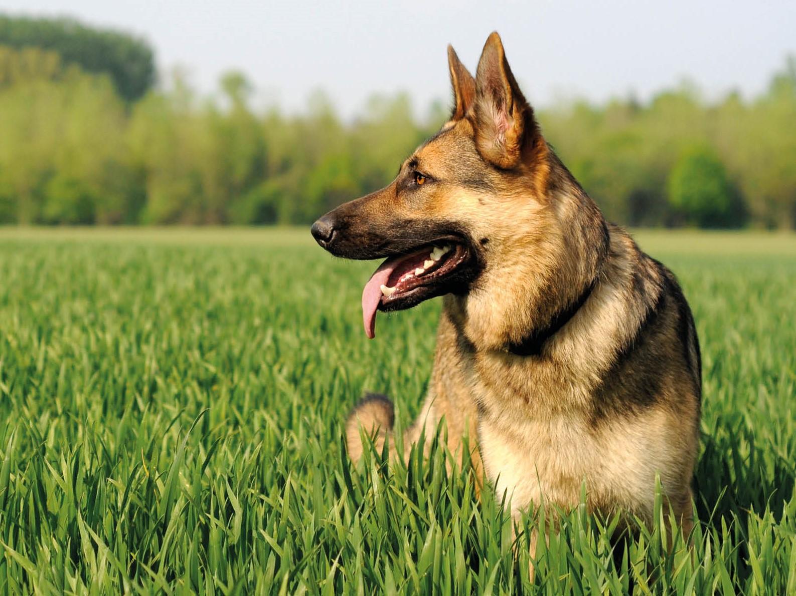 Psi chovatelské potřeby, krmivo, nutriční doplňky