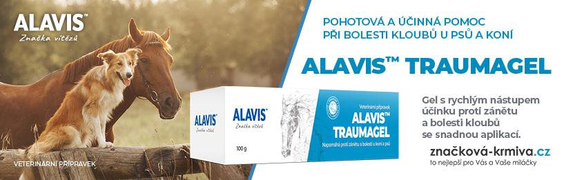 Alavis Traumagel