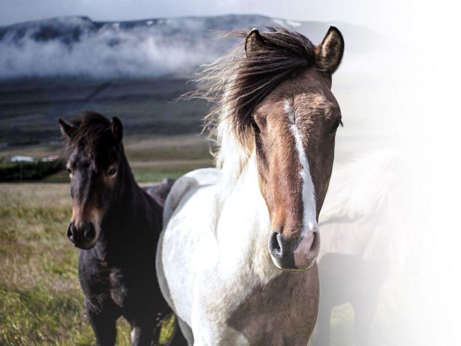 Krmiva pro koně, nutriční doplňky