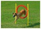 Agility překážky pro výcvik psa