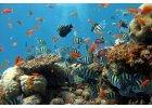 Mořská akvária
