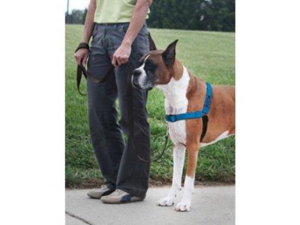 PetSafe postroj EasyWalk Deluxe, modrý, velikost M/L