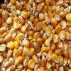 2725 kutlire kukurice krmna zrno 1 kg