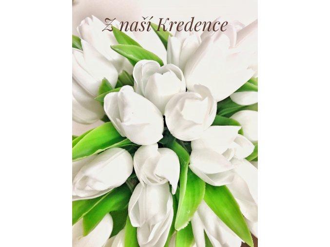 tulipán sněhově bílý