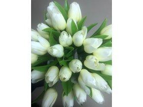 Francouzský tulipán krémově Bílý