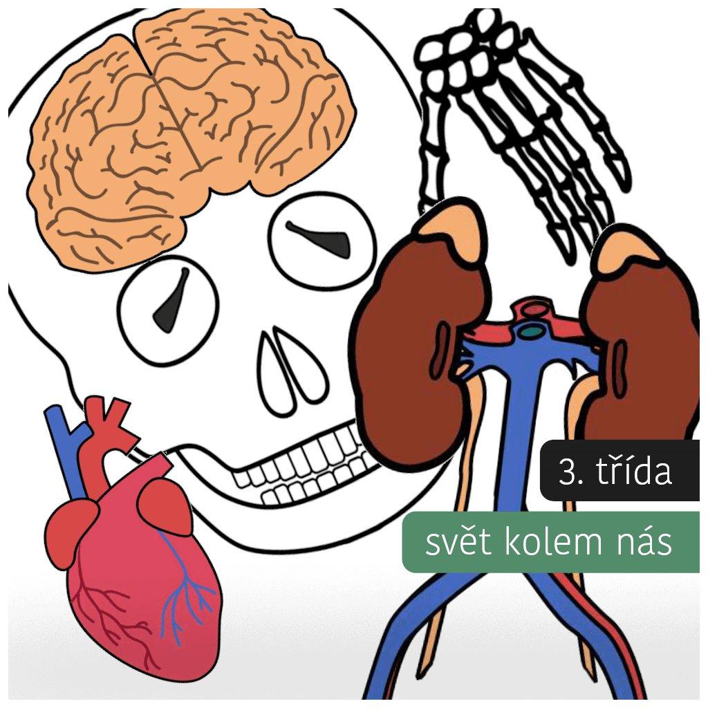 Lidské tělo: Kostra + orgány