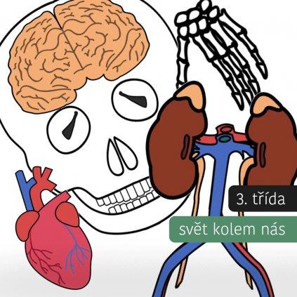 Lidské tělo - kostra + orgány