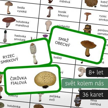 domino houby