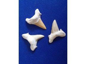 Fosilní žraločí zuby