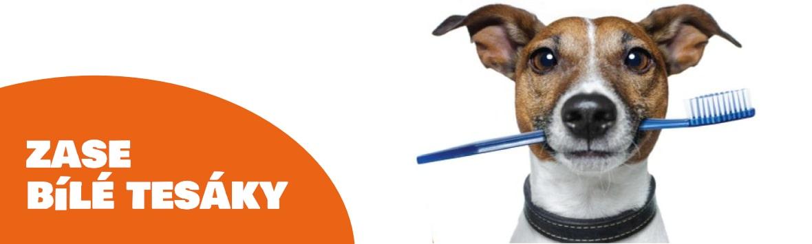 odstranění zubního kamane u psů