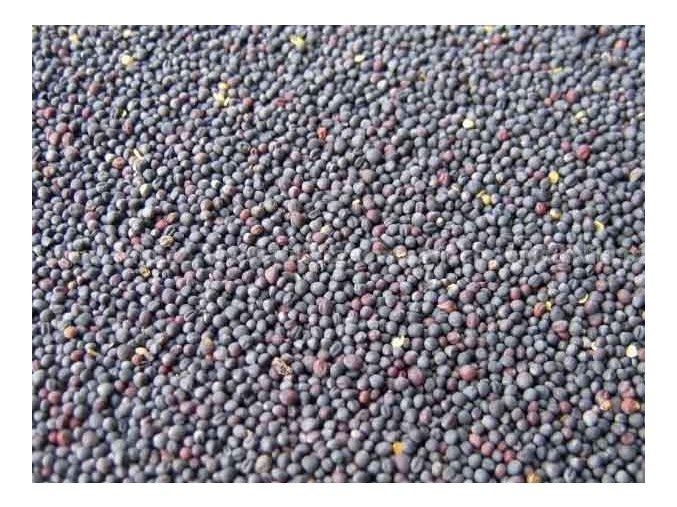 Granum řepka 500 g