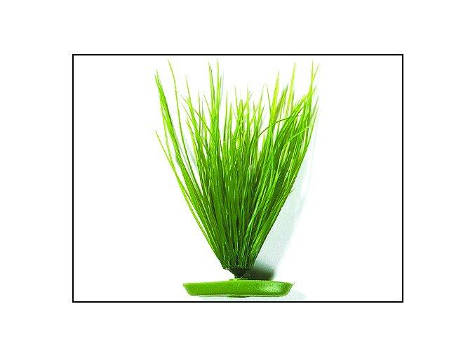 Rostlina MARINA Hairgrass 20 cm