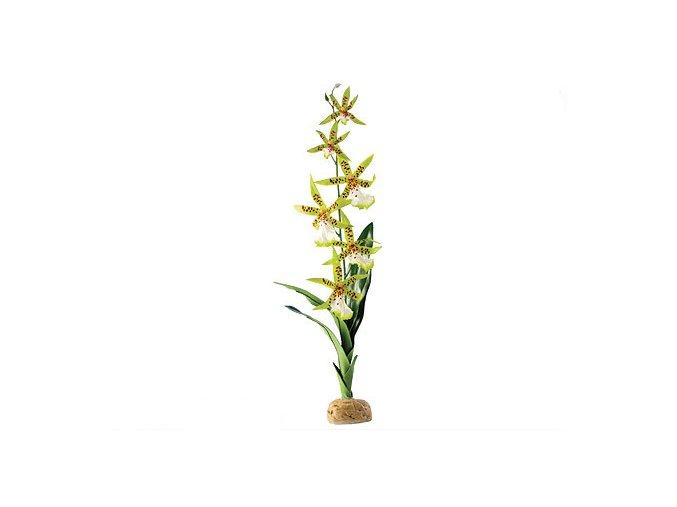 Rostlina EXO TERRA Spider Orchid